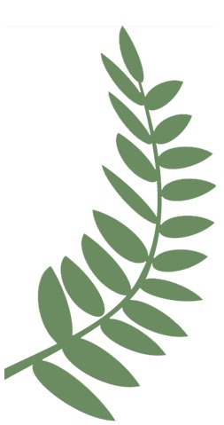 Fern Graphic